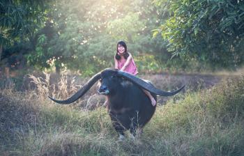 Buffalo Ride