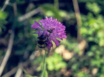 Bug on the flower