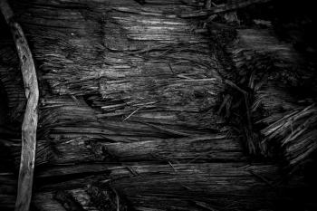 Burned Wood Texture