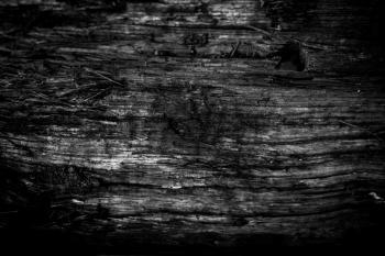 Burned Wood Texture