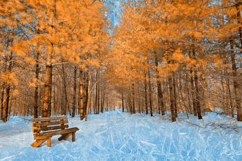 Burning Ice Trail