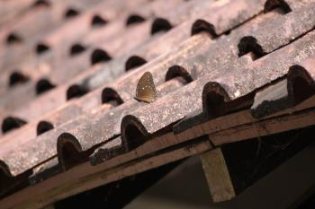 Butterfly on Roof Tiles