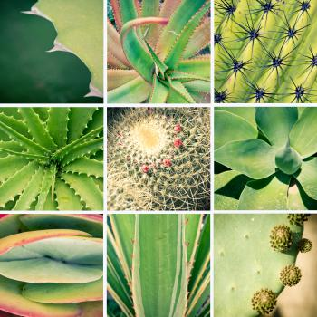 Cactus and plants collage