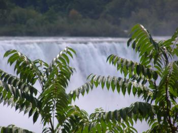 Canada - Niagara Falls - Water - Trees