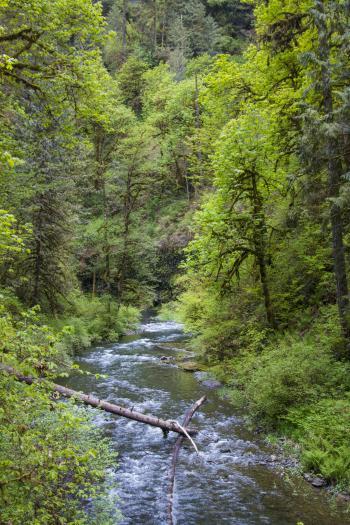 Canyon Trail, Silver Creek Park, Oregon
