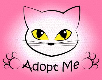 Cat Adoption Shows Kitten Kitty And Felines