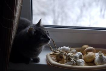 Cat and onion