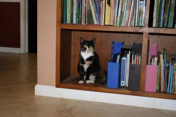 Cat Bookworm