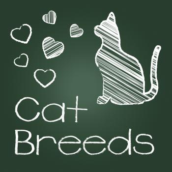 Cat Breeds Represents Pedigree Kitty And Reproducing