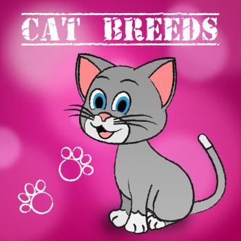 Cat Breeds Shows Bred Pets And Kitty