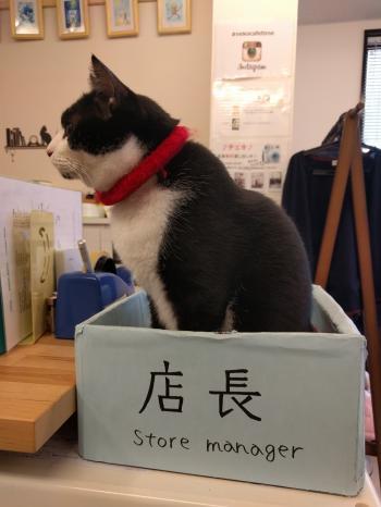 Cat cafe, Inari, Kyoto