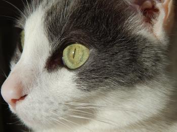 Cat closeup