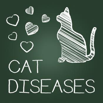 Cat Diseases Indicates Puss Kitten And Kitty