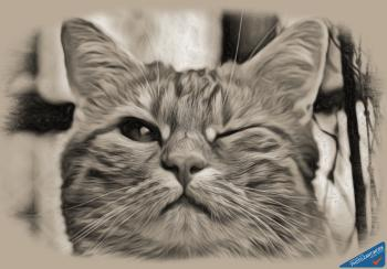 Cat - ID: 16218-130648-8834