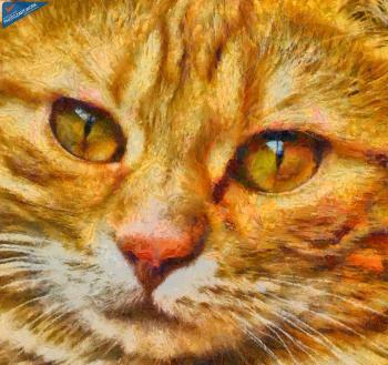 Cat - ID: 16218-130702-9045