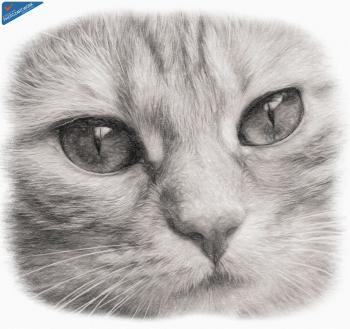 Cat - ID: 16218-130715-5280