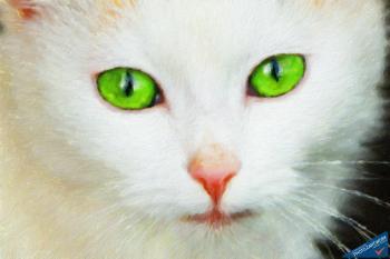 Cat - ID: 16236-105017-7342