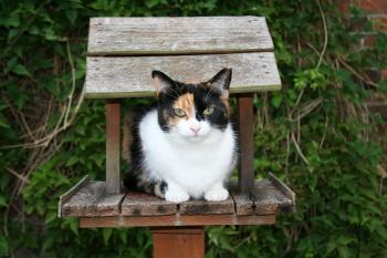 Cat in Birdhouse