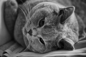 Cat in Greyscale Photo