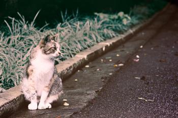 Cat, little cat