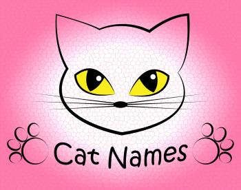 Cat Names Represents Kitty Pets And Feline