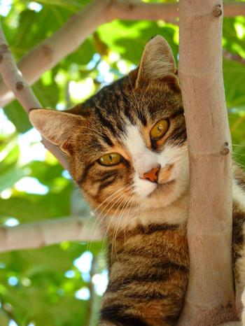 Cat on Tree Branch during Daytime Focus Photography