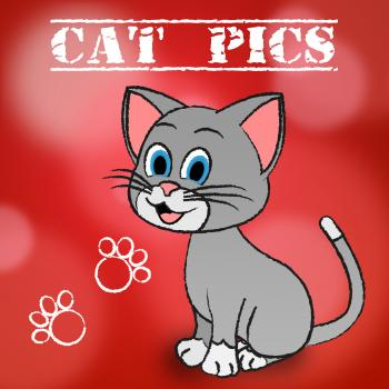 Cat Pics Shows Pet Photo And Pictures