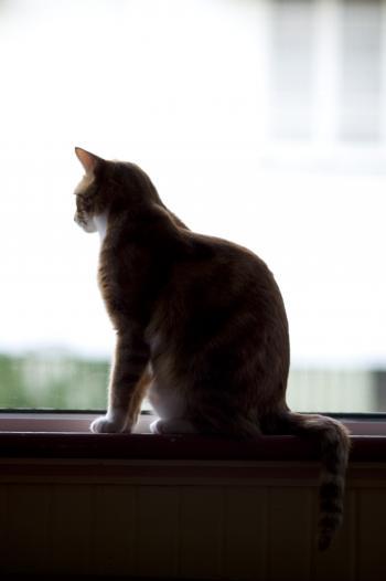 Cat silohuette