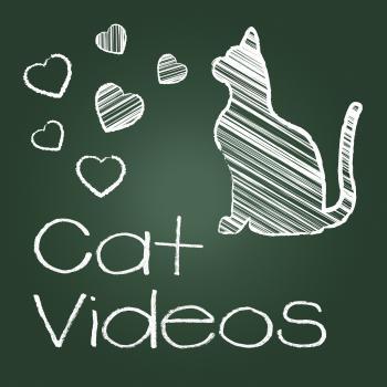 Cat Videos Represents Audio Visual And Cats