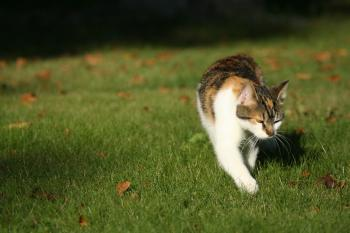 Cat walking on grass