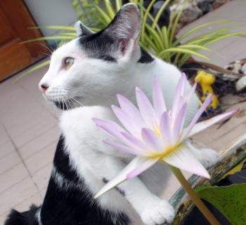 Cat With Water Lily