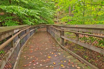 Catoctin Mountain Boardwalk - HDR