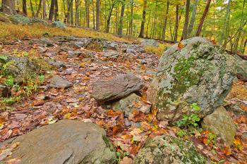 Catoctin Mountain Trail - HDR