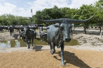 Cattle Statues