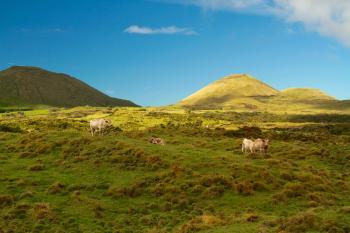 Cattles on Field Overlooking Mountains Under Blue Skt