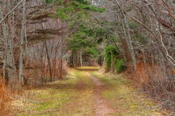 Cavendish Forest Trail - HDR