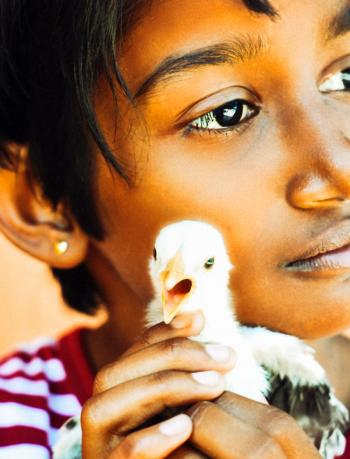 Child Holding White Chick