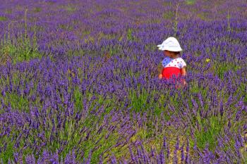 Child in a lavender plantation