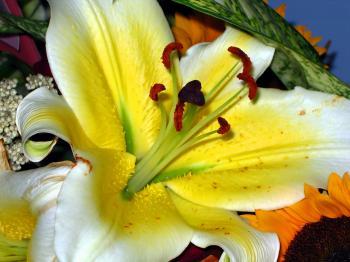 Chinese Flower Arrangement