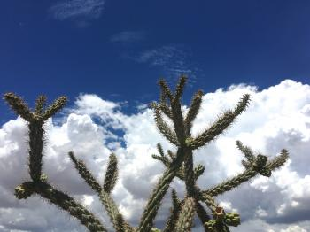 Cholla and Sky