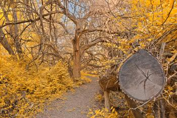 Chopped Wood Trail - Gold Fantasy HDR