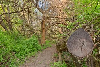 Chopped Wood Trail - HDR