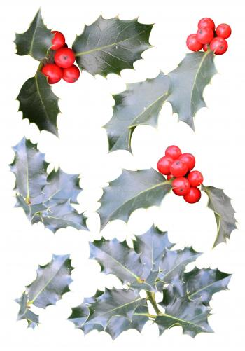 Christmas holly cutouts