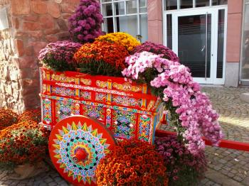 Chrysanthemum cart