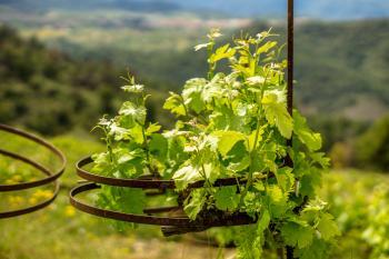 Circular Vines