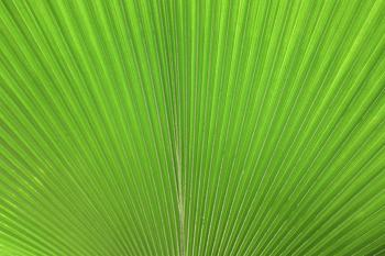 Close-up of a large green tropical leaf