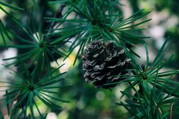 Close-up of an acorn