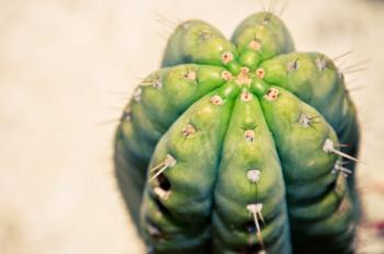 Close up of cactus plant
