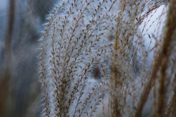 Close-up of Grass Against Sky