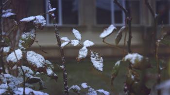 Close-up of Snow on Plants during Winter